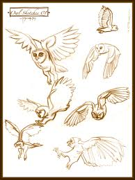owl sketches 01 by cre8tivemarks on deviantart