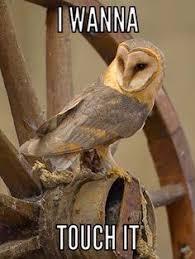 Funny Owl Meme - funny owl memes http ibeebz com humor pinterest funny owls