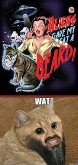 Cat Beard Meme - aliens gave my cat a beard memes com
