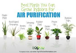 best plants for air quality good indoor plants gardening guide best house plants quality dogs