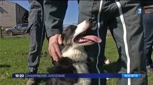 chambre d agriculture ardennes une formation de chiens de troupeau pour les agriculteurs 3