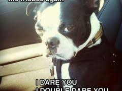 Pissed Off Meme - pissed off dog weknowmemes