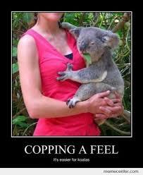 Koala Meme - like a boss koala by ben meme center