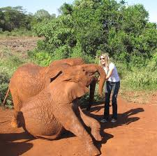 bed image gisele bündchen opposes trump lifting elephant hunting ban
