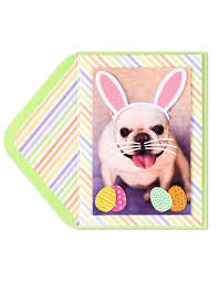 papyrus thanksgiving cards easter cards digs n gifts