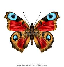 butterfly open wings top view symmetrical stock vector 598955378