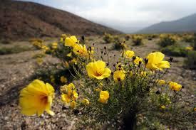 pin by orlando salcedo galleguillos on desierto florido atacama