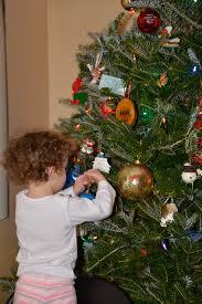 tree care paine u0027s christmas trees llc