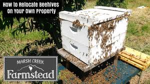 moving beehive locations on your property relocating beehives