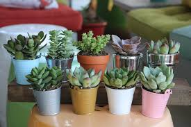 planting pots for sale 2 5