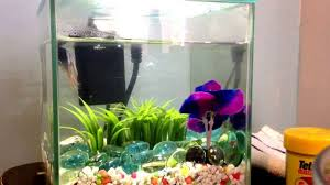 betta fish tank tour youtube