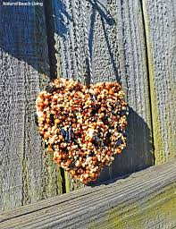 easy bird seed ornaments recipe living