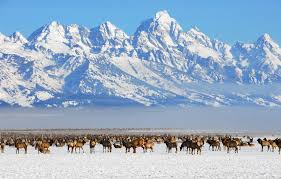 Wyoming nature activities images Bentwood inn jackson hole wyoming jetsetter jpeg