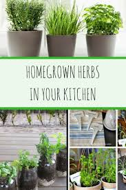 homegrown herbs in your kitchen managers of the home