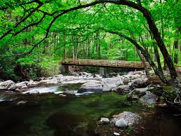 Tennessee national parks images Bridge over creek along greenbrier great smoky mountains national jpg