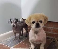 dog barn dog found in barn u0027scared to death of people u0027