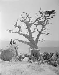 salvador dali with wife sketching cypress tree pictures getty images