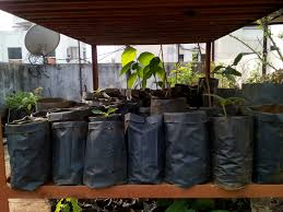 nursery native plants organic gardening group pune micro nursery a house for native
