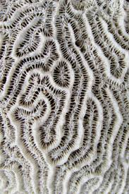 Tecture Design by Best 25 Natural Texture Ideas On Pinterest Nature Pattern