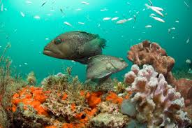 the oceanadapt website tracking fish populations as the climate