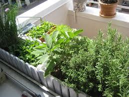 Kitchen Herb Garden Design Modren Balcony Herb Garden T And Decor