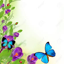 and butterfly border design