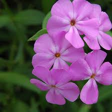 Botanical Gardens In Illinois Botanical Gardens In Illinois Usa Today