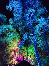 enchanted forest of light tickets enchanted forest pitlochry perth and kinross scotland an