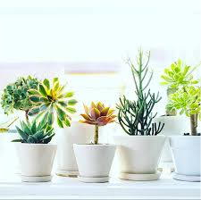 best planters where to find the best planters in los angeles jungalowjungalow