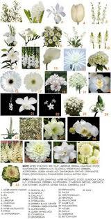 wedding flowers names white wedding flower guide white wedding flowers flower and