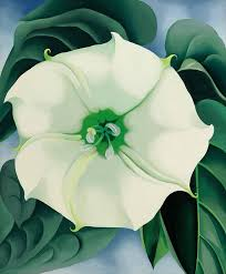 white flower jimson white flower no 1 1932 by o keeffe
