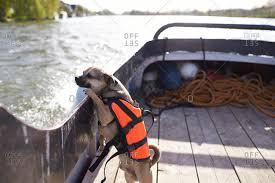 thames river boats dogs henley on thames stock photos offset