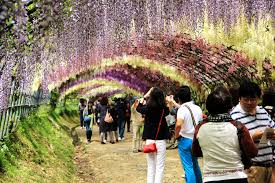 tunnel of flowers eric in korea 09