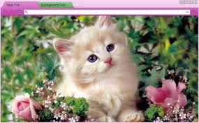 theme google chrome rabbit 12 kitten chrome themes desktop wallpapers more for true cat