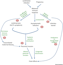 pathophysiology of leishmania infection during pregnancy trends