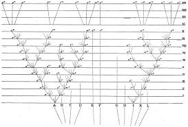 charles darwin tree of diagram from the origin of species