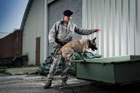 army career profile military working dog handler