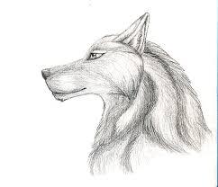 wolf head sketch by tribalwolfie on deviantart