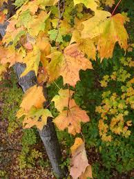 history on thanksgiving thanksgiving psalmboxkey u0027s blog