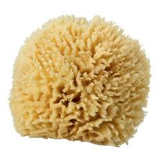 Sponge Faux Painting - choosing the right sea sponge for faux painting wool grass or
