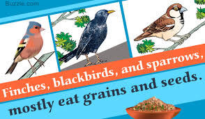 how to attract crows to your backyard