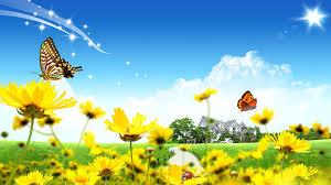 flower beautiful landscape fields grass ladybug sunny flowers