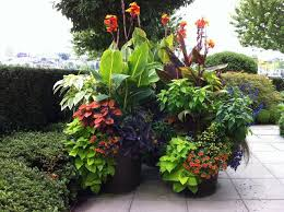 Tropical Gardening Ideas Tropical Landscape Design Ideas Gardening Flowers 101 Gardening