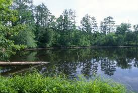 North Carolina forest images National forests in north carolina uwharrie national forest jpg