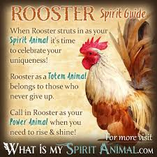 rooster symbolism u0026 meaning spirit totem u0026 power animal