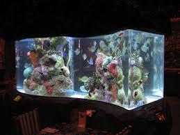 coast aquariums custom aquariums and care