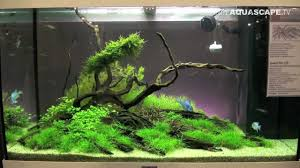 Tank Aquascape Aquascaping Aquarium Ideas From Aquatics Live 2012 Part 2 Youtube