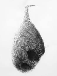 bird nest no 8 contemporary art for sale art is gallery