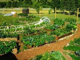 Permaculture Urban Garden Permaculture Garden Greenmylife Anyone Can Garden