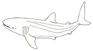 whale sharks jen richards